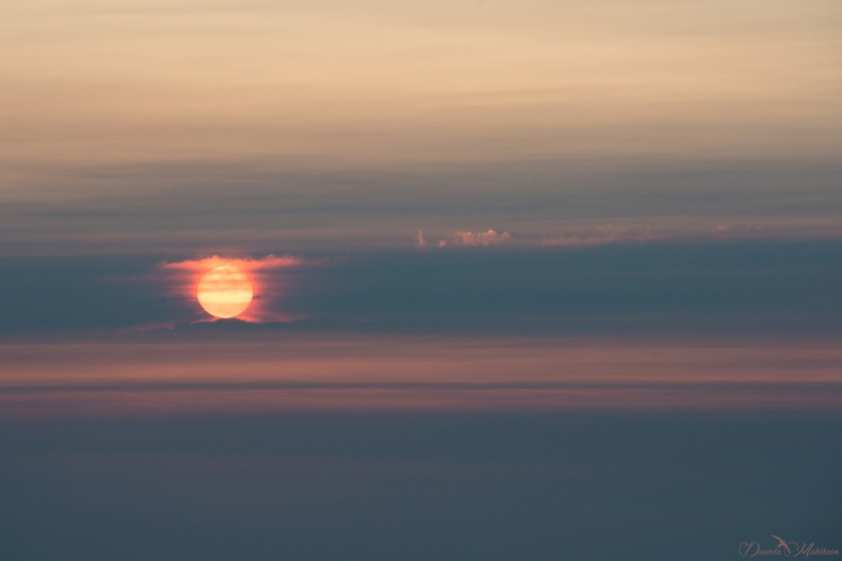 daniela, muehlheim, danielamühlheim, ladybird, exploring, earth, abundance, sunset