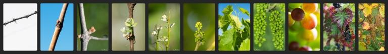 daniela, muehlheim, danielamühlheim, ladybird, exploring, earth, abundance, grapevines, vineyard, wine