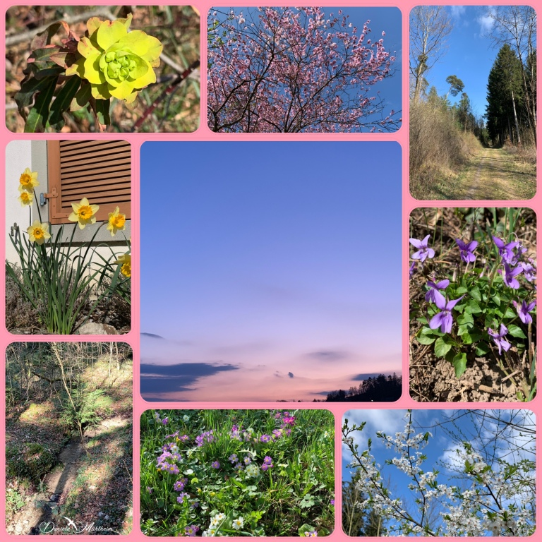 daniela, muehlheim, danielamühlheim, ladybird, exploring, earth, abundance, flower, spring,