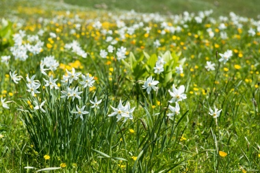 daniela, muehlheim, danielamühlheim, ladybird, exploring, earth, abundance, flower, spring, summer, narzisse