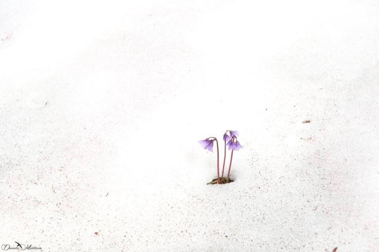 daniela, muehlheim, danielamühlheim, ladybird, exploring, earth, abundance, flower, spring, summer, snow