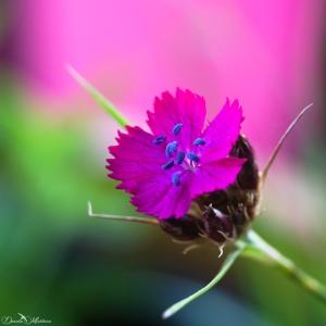 daniela, muehlheim, danielamühlheim, ladybird, exploring, earth, abundance, flower, spring, summer,
