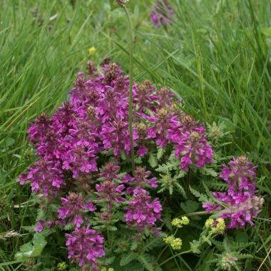 daniela, muehlheim, danielamühlheim, ladybird, exploring, earth, abundance, flower, spring, summer, alps