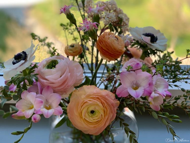 daniela, muehlheim, danielamühlheim, ladybird, exploring, earth, abundance, stayathome, flowers, spring