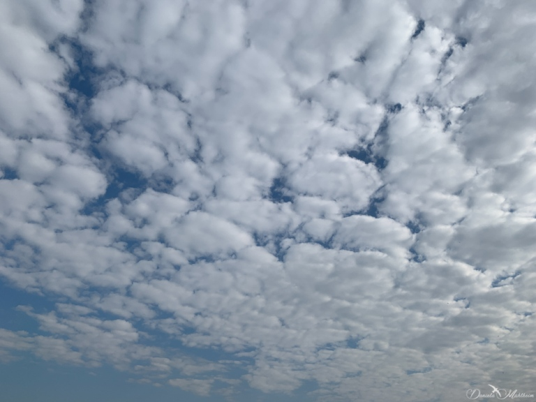 stayathomeframed, daniela, muehlheim, danielamühlheim, ladybird, exploring, earth, abundance, sky, cloud