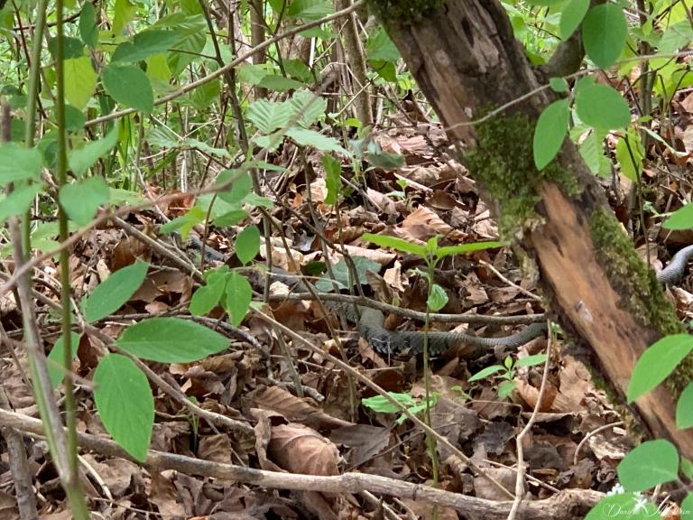 daniela, muehlheim, danielamühlheim, ladybird, exploring, earth, abundance, forest, wild, animal, snake