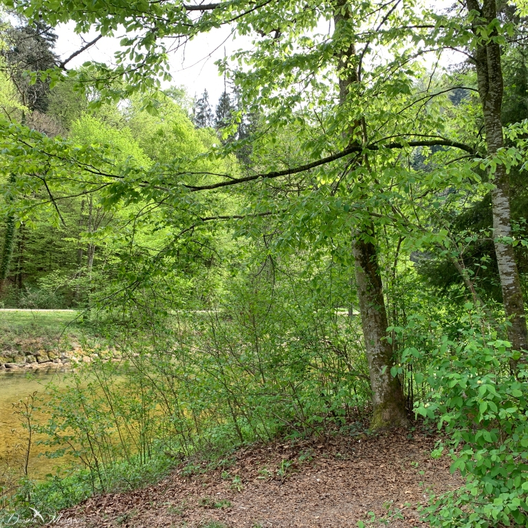 daniela, muehlheim, danielamühlheim, ladybird, exploring, earth, abundance, forest, wild, animal