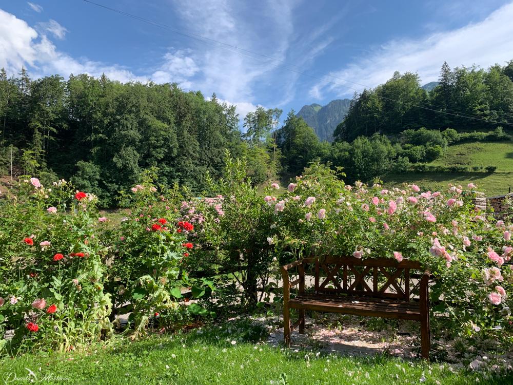 daniela, muehlheim, danielamühlheim, ladybird, exploring, earth, abundance, switzerland,