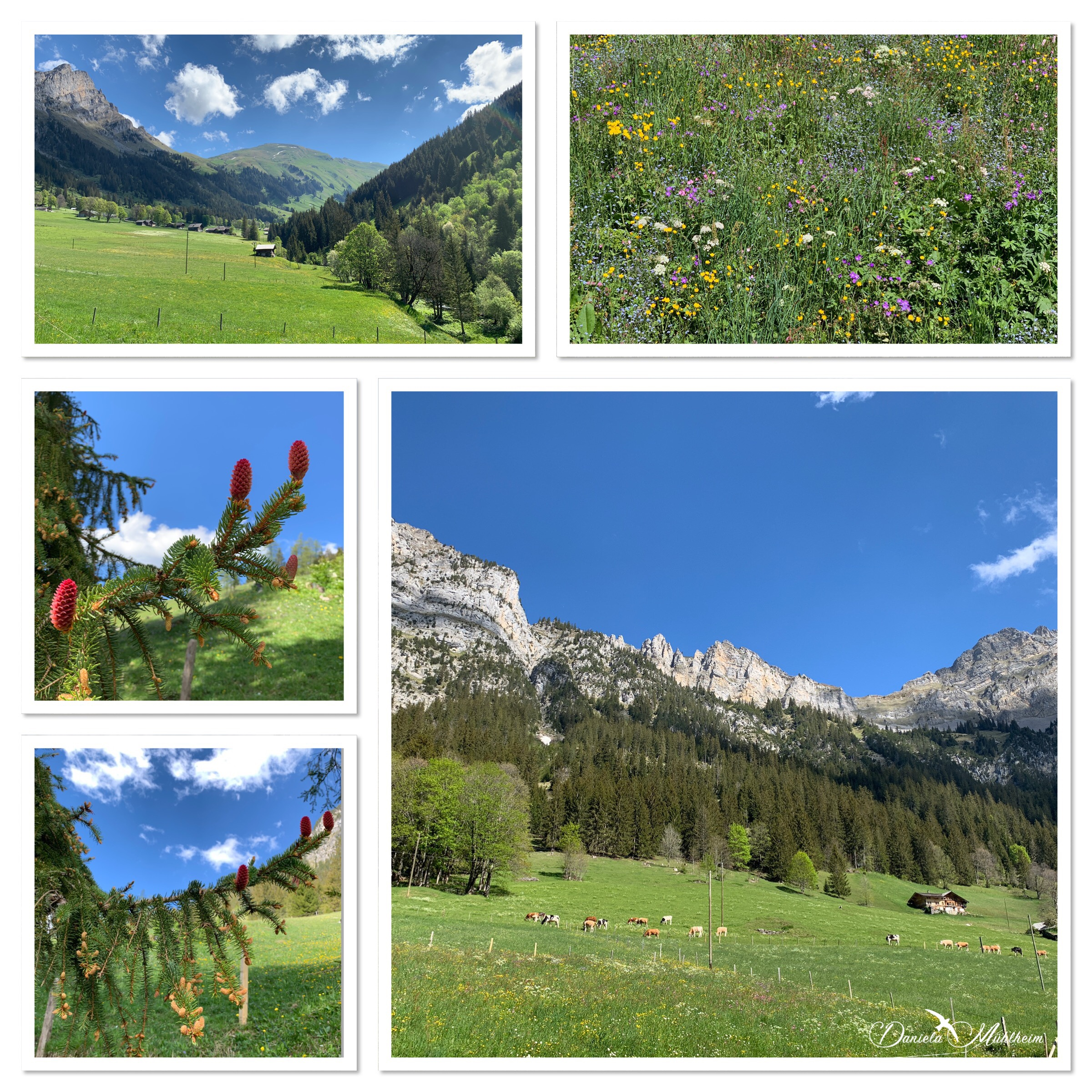 daniela, muehlheim, danielamühlheim, ladybird, exploring, earth, abundance