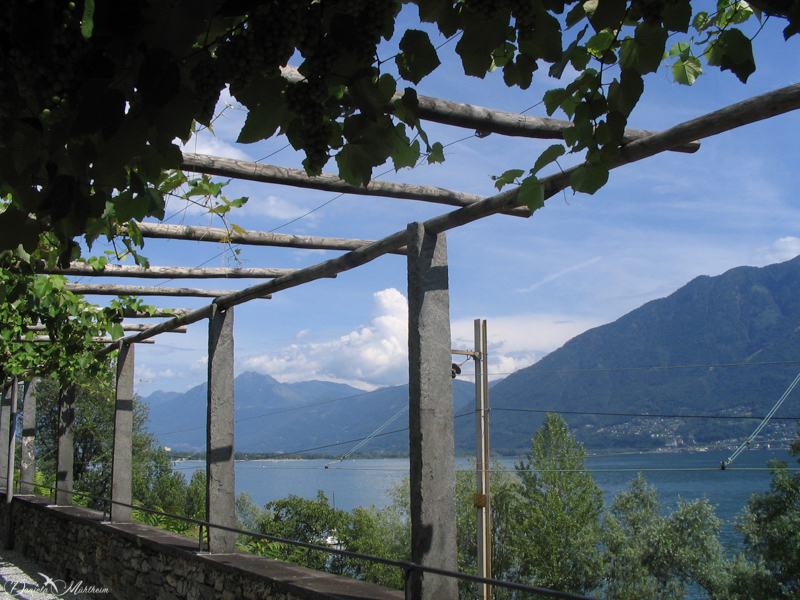 daniela, muehlheim, danielamühlheim, ladybird, exploring, earth, abundance, Switzerland, Ticino