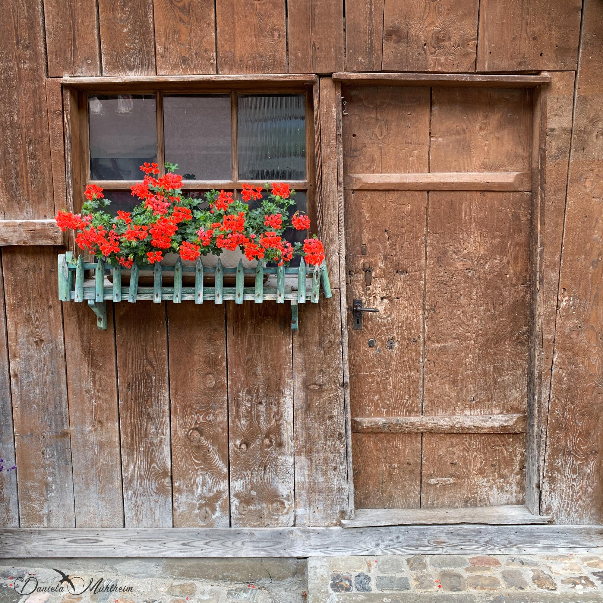 daniela, muehlheim, danielamühlheim, ladybird, exploring, earth, abundance, switzerland, danielamuehlheim, schweiz, door